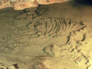 La Cueva de Avín, o cómo hacer un repaso a la fauna glaciar de hace más de 40.000 años