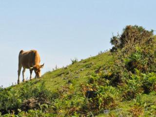 Monte Naranco, un paraíso en Oviedo para los amantes del senderismo y la naturaleza